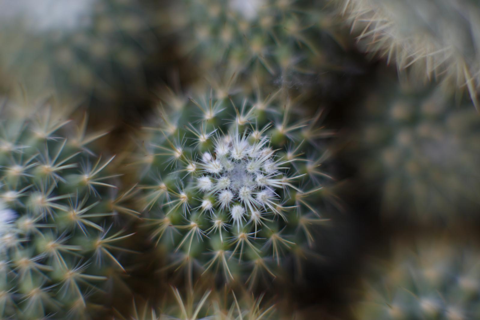 UW Botany Greenhouse.