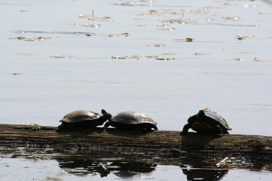 turtles_small