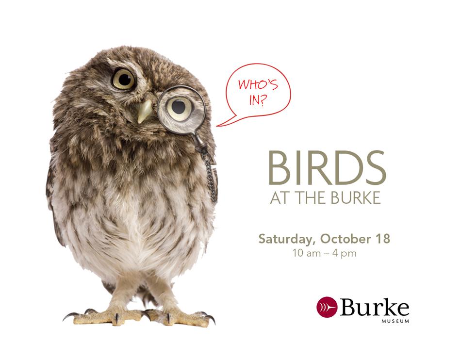 birds at burke