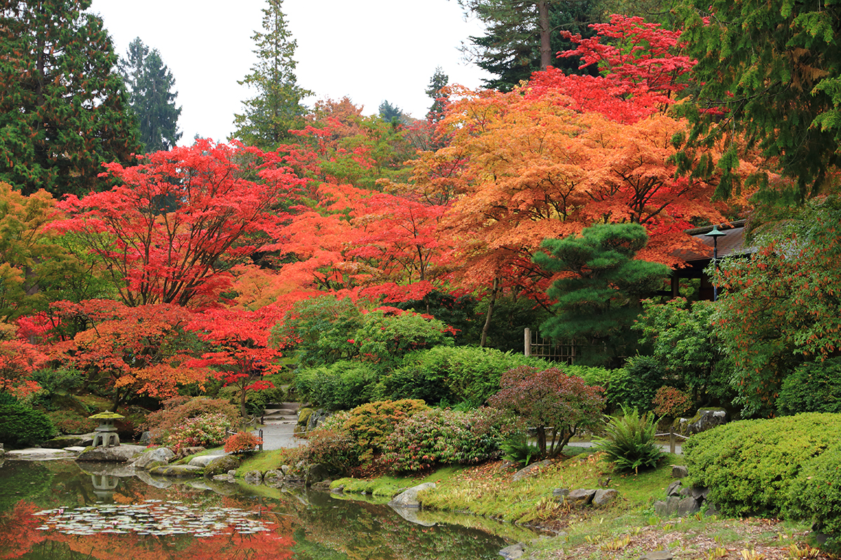 fall in love with the japanese botanical garden the whole u