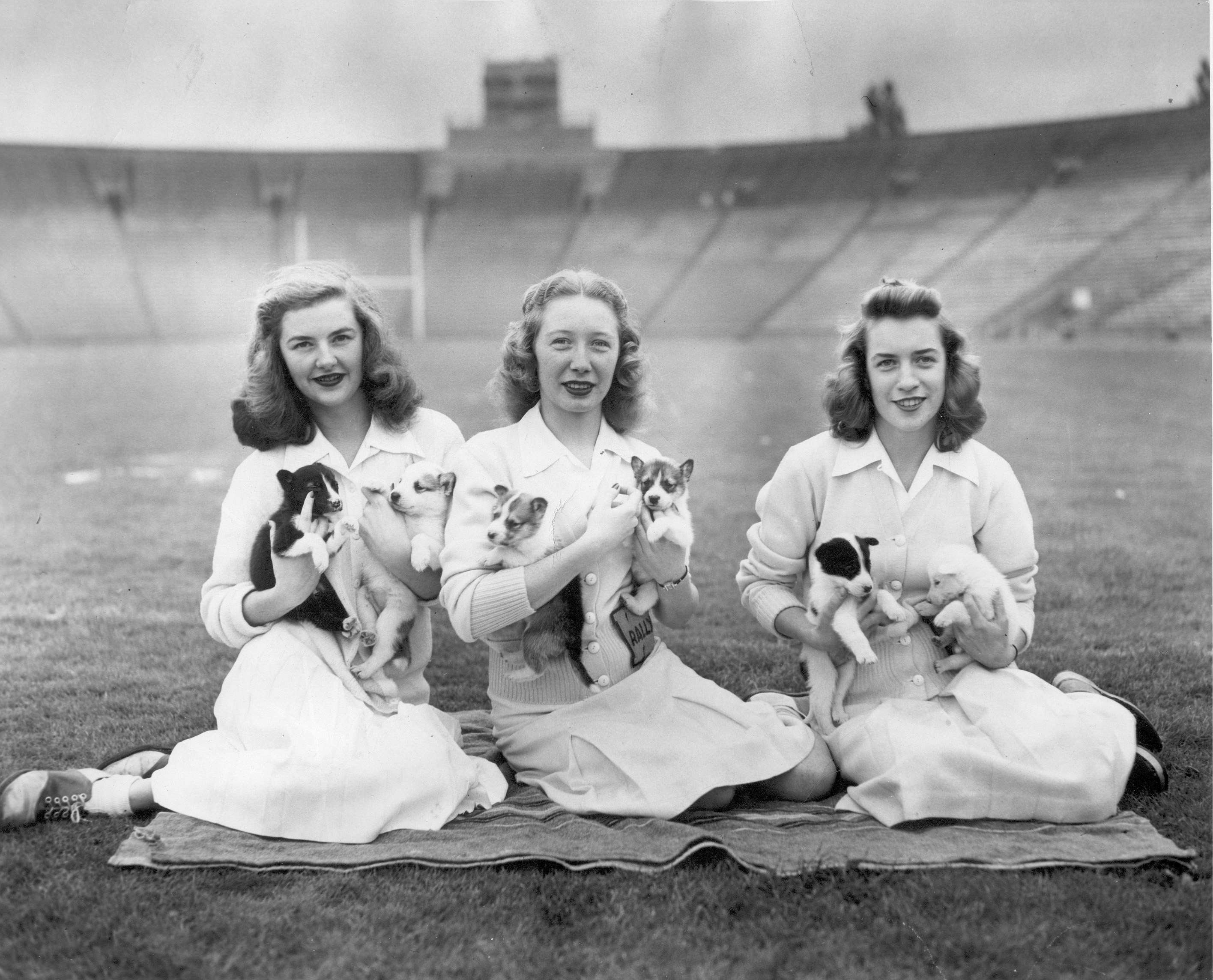One of these puppies was chosen to become the Husky mascot! A campus poll was held at the University Book Store to determine the official mascot. The winning pup was presented to the students at the Homecoming game on Oct 26, 1946.
