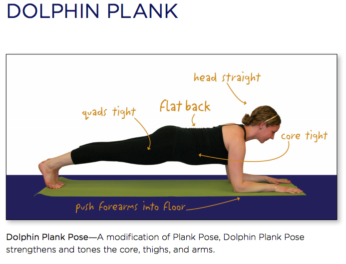 yoga dolphin plank