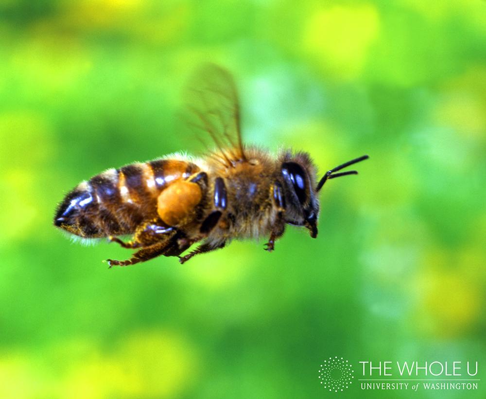 Honey Pacific Northwest Bees
