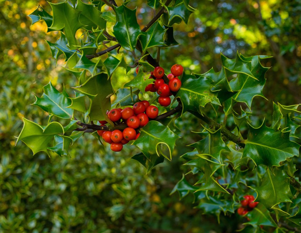 A Quick And Juicy Guide To Berries Of The Northwest The